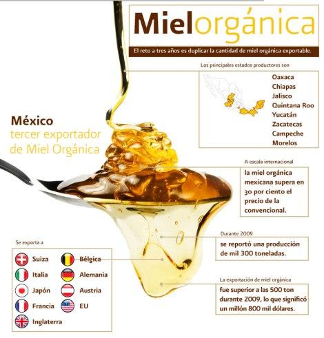 Infografia_Miel_organica